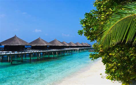 Stunning Tropical Beach Bungalows