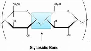 Glycosidic Linkage  Definition  U0026 Overview