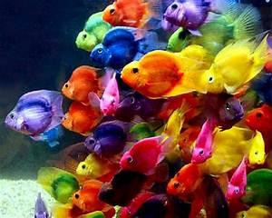 Beautiful Wallpapers: beautiful fish wallpaper