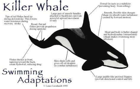adaptations natural selection  grade science