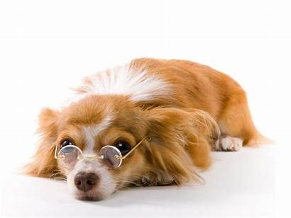 Funny Dog Wallpapers Dogs