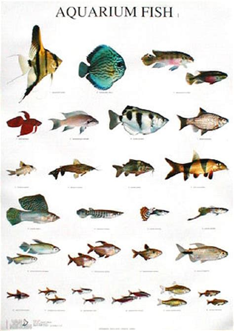 tropical fish types names tropical fish types
