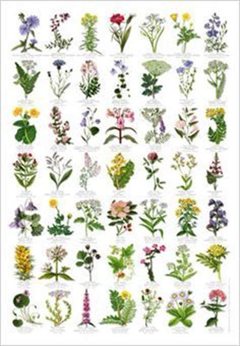 type chart flower types and charts on