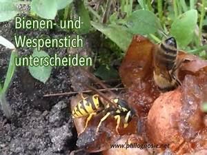 Was Tun Gegen Wespen Im Kirschlorbeer : bienenstich was tun welche behandlung hilft gegen die ~ Lizthompson.info Haus und Dekorationen