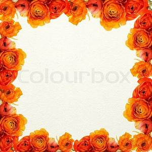 Frame of the orange flowers on a white texture | Stock ...