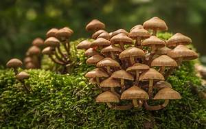 7 Ways Mushrooms Can Solve The World U0026 39 S Problems