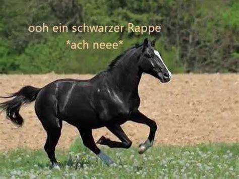 lustige sprueche rund ums thema pferd und reiter youtube