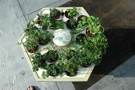 hydroponic herb garden hydroponic herb garden on the roof flickr photo