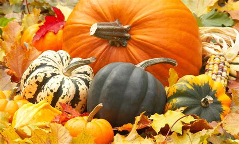 Desktop Fall Backgrounds Pumpkins by Fall Pumpkins Wallpaper Sf Wallpaper