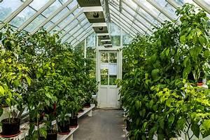 Was Kann Man In Ein Gewächshaus Pflanzen : wie funktioniert ein gew chshaus die vorteile eines ~ Lizthompson.info Haus und Dekorationen