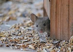 Maus Im Haus : haus maus foto bild tiere natur bilder auf fotocommunity ~ A.2002-acura-tl-radio.info Haus und Dekorationen
