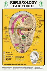 Reflexology Ear Chart