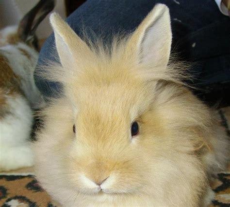 Gabbia Coniglio Nano Prezzo - coniglio nano caratteristiche e prezzo idee green