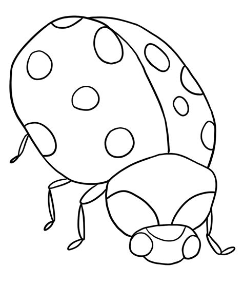 printable ladybug coloring pages  kids