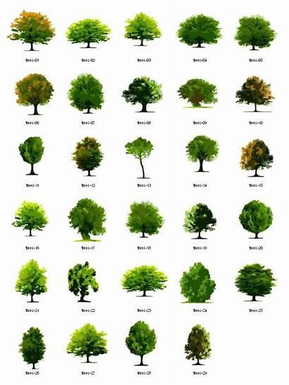Landscape Clipart Plant Arch Texture Trees Architecture