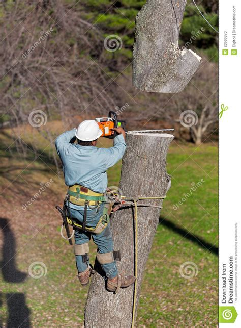 worker  chainsaw cutting  tree stock photo image