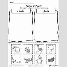 Kindergarten Plants And Animals Printable Worksheets Myteachingstationcom