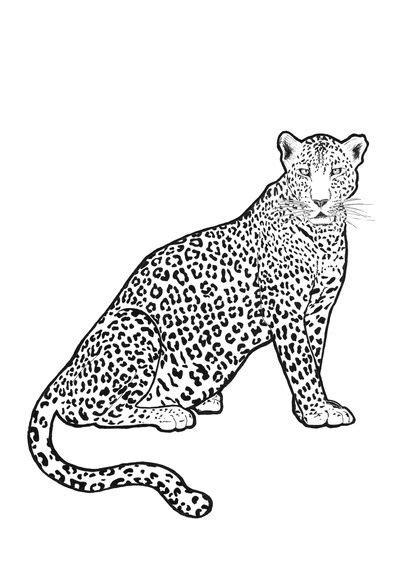 SNOW LEOPARD Art Print by SYSTRAMI | Leopard art print