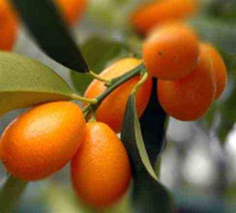 tanaman hias buah ciri ciri jenis macam macam