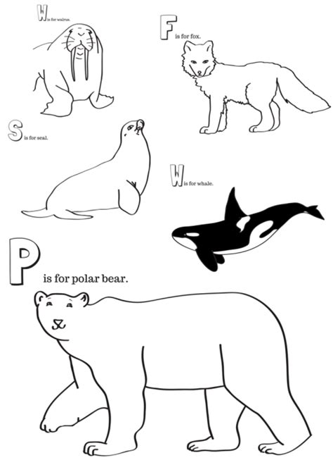 arctic animals printable coloring pages miniature