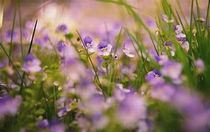 Flowers Flores Lila Viola Fiori Blumen Desktop