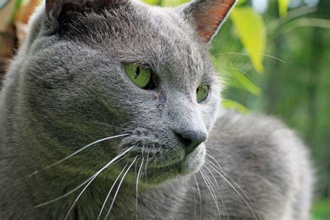 images nature profile male pet fur portrait