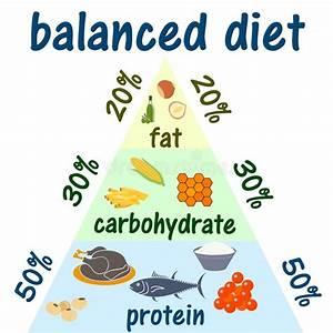 Fat Protein Carb Diagram
