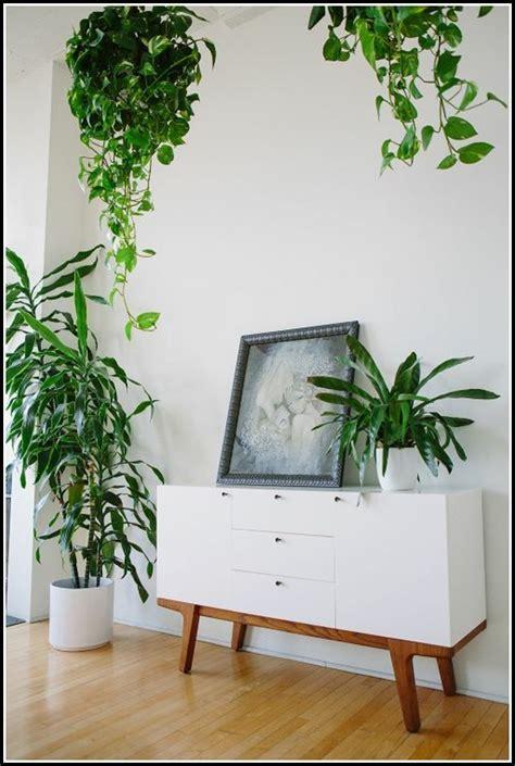 Feng Shui Pflanzen Wohnzimmer by Feng Shui Wohnzimmer Pflanzen Wohnzimmer House Und