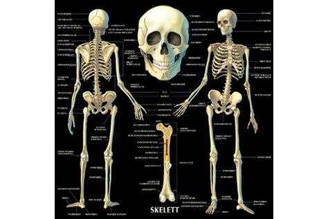wissen fuer kinder anatomie