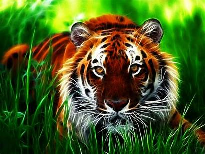Tiger 3d Wallpapers Backgrounds Background Desktop Tigers