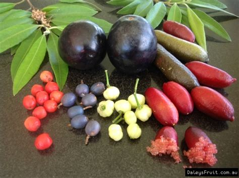 Bush Foods Australia