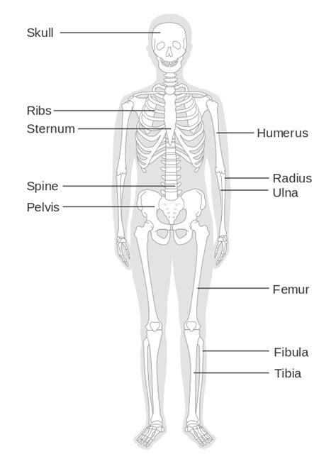 filediagram   skeleton cruk svg wikimedia commons