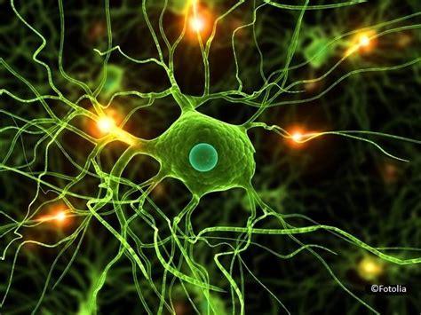 neurologie degum