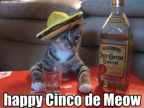 5 De Mayo Memes - cinco de mayo meme cat tequila today s hits pinterest weigh loss happy birthday quotes