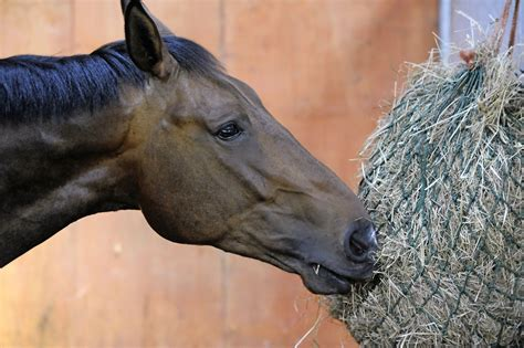 horses horse hay feeding winter feed dropping loose droppings magazine why his need