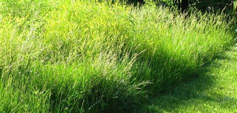 Best Native Grasses For A Yard  Welcome Wildlife