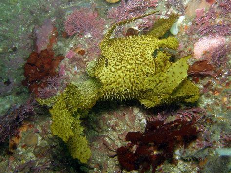 brown algae brown algae phaeophyta menu