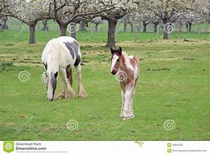 Foal And Mother Royalty Free Stock Photos - Image: 30850228