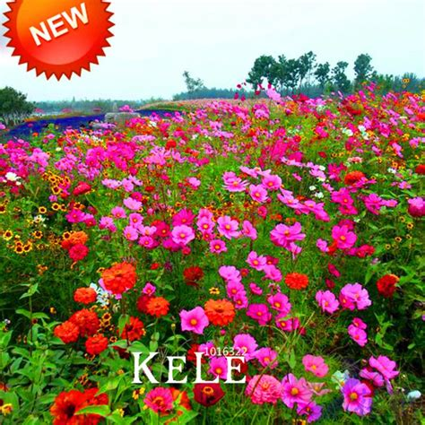 seeds wildflowers tolerance waterlogging combination mix aliexpress flowers