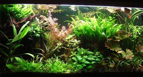 plantes aquarium eau douce aquariophilie