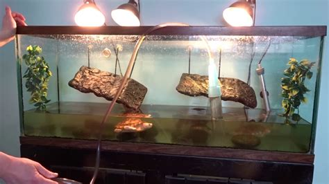 how to keep turtle tank clean turtle tank cleaning how i clean my turtle tank youtube