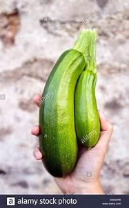 Zucchini Faulen An Der Spitze : siamesische zwillinge stockfotos siamesische zwillinge bilder alamy ~ Eleganceandgraceweddings.com Haus und Dekorationen