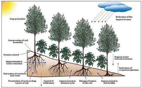 But did you know that pouring whatever you do don't just throw them out! Ecological interactions in coffee agroforestry system (adapted from... | Download Scientific Diagram
