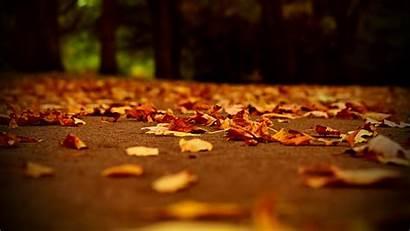 Autumn Wallpapers Desktop Background Fall Widescreen Leaves