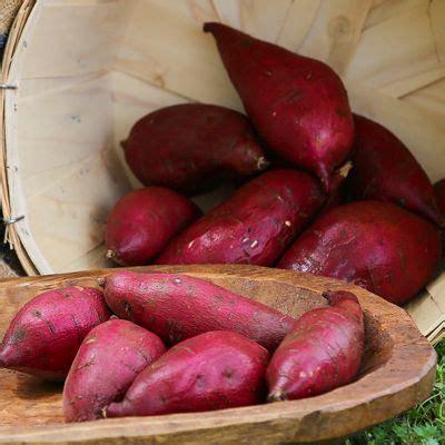 Murasaki Sweet Potato Slips | Sweet potato slips, Japanese sweet potato, Sweet potato