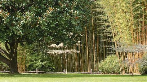 jardin paysager conseils dun paysagiste pour bien