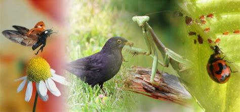 Natural Pest Control  Blackle Mag