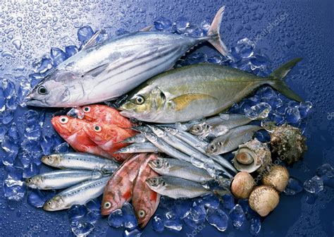 healthiest fish fresh and healthy fish seafood stock photo 169 umairsohail 1517299