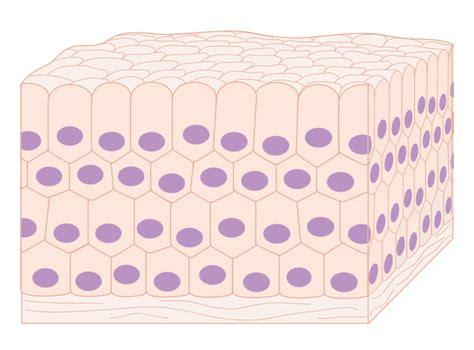 filediagram showing  normal cells    tissue