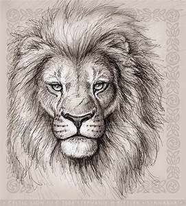 Lion Drawings Related Keywords - Lion Drawings Long Tail ...